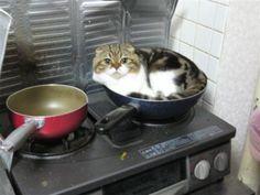 What's not for dinner...