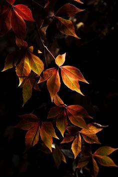 Dedicated to all things fall. Relax and unwind in Autumn beauty! Deep breaths of chilled air remind you of days gone by. Autumn Day, Autumn Leaves, Autumn Nature, Autumn Flowers, Autumn Trees, Seasons Of The Year, Fall Season, Belle Photo, Mother Nature