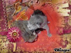 two kittens Created by Joyousjoym Blessings