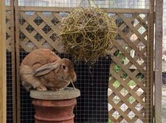 Place 2 wire hanging baskets together securely for a great hanging hay rack!