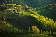 500px / Photo A green morning in Holbav - Brasov - Romania by Adrian Petrisor