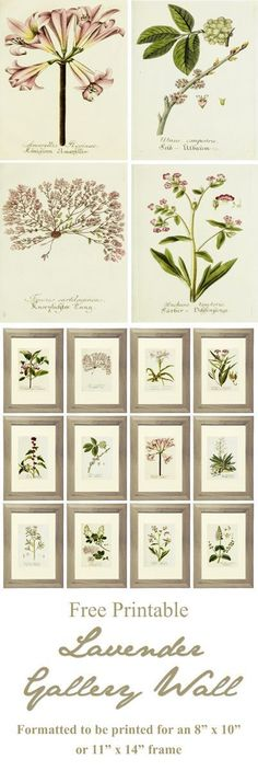 21 Free Printables for a Lavender Gallery Wall with beautiful botanical prints…