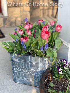 bulb planter -coral tulip and muscari