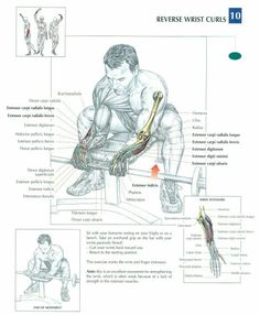 Reverse Wrist Curls ♦ #health #fitness #exercises #diagrams #body #muscles #gym #bodybuilding #arms