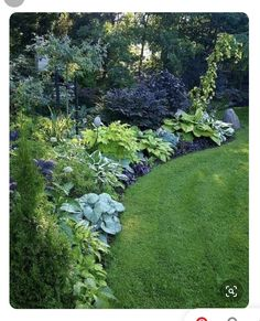 Diy Garden, Garden Cottage, Shade Garden, Garden Paths, Border Garden, Garden Bed, Backyard Cottage, Pool Garden, Ferns Garden