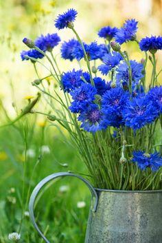 Flowers and Gardens Flowers Nature, Spring Flowers, Wild Flowers, Beautiful Flowers, Blue Garden, Art Floral, Flower Wallpaper, Flower Art, Flower Power