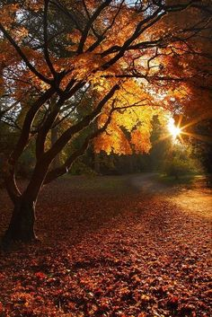 immortal-autumn:  Autumn Sunset at Fire in the Glass tumblr on We Heart It.