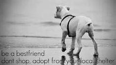 Don't shop, adopt.