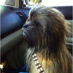 MAY THE FOURTH BE WITH YOU!! #Chewy #chewbacca