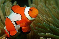 Criaturas do fundo do mar tem dons incríveis e tão diferentes que você nunca ouviu falar http://r7.com/5GdG