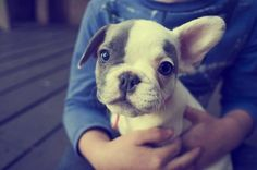 we are thinking about killing the kids college fund and getting a French bulldog instead