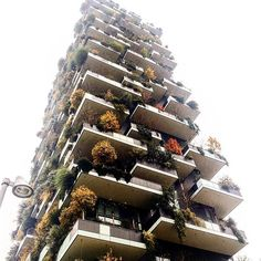 #boscoverticale #skyscraper #building #tower #tree #stefanoboeri #archilovers #architizer #view #photo #lookingup #streetphotography #myphotography #inspiration #abitare_residency #divisare #dezeen #architettura #architecture #arquitetura #city #milano #verticalforest #overcast #sky #architecture_hunter #myphotography