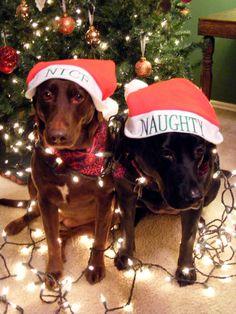 My dog Bella & Chloe for our christmas lights card idea 2010.