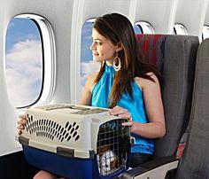 best pet carrier