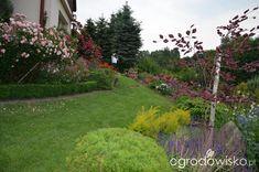 Kolorowy ogród na piasku - strona 476 - Forum ogrodnicze - Ogrodowisko Stepping Stones, Sidewalk, Outdoor Decor, Gardens, Flowers, Stair Risers, Side Walkway, Outdoor Gardens, Walkway