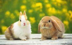 ほっこり♡和み系の動物写真 厳選40選 - ペット日和