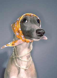 Dog in pearls and head scarf