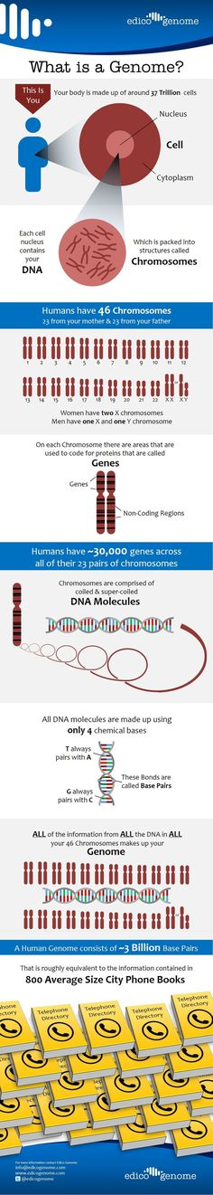 What Is A Genome?                                                       Infographic