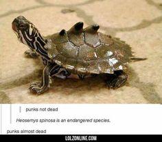 See? Punk Is Not Dead#funny #lol #lolzonline