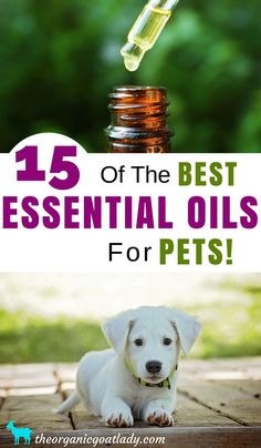 15 Of The Best Essential Oils For Pets, Aromatherapy Recipes, Essential Oil Recipes, Essential Oils For Dogs, Essential Oils For Animals Are Essential Oils Safe, Essential Oil Set, Essential Oil Diffuser Blends, Organic Essential Oils, Doterra Essential Oils, Yl Oils, Aromatherapy For Dogs, Aromatherapy Recipes, Oils For Dogs