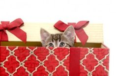 Pets As Gifts: The Do's and Don'ts