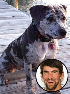 "Michael Phelps, the Baltimore native who earned a record-breaking 22 medals over the course of four Olympics, also earned the admiration and respect of animal lovers everywhere after adopting a Catahoula mix he saw on The Today Show's segment of ""Bow to Wow""."