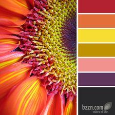 Colourful sunflower