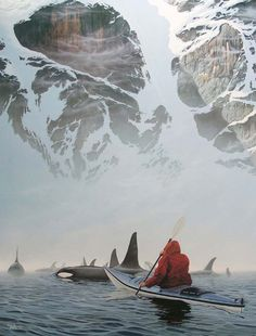 Kayak in the San Juan islands of Washington state during Orca migration season.