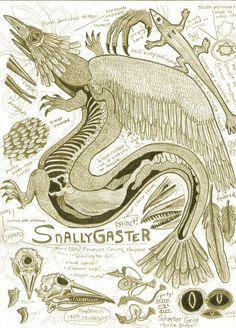 Snallygaster Dragon Anatomy Page Drawing Magical Creatures, Fantasy Creatures, Dragon Anatomy, American Dragon, Bad Drawings, Legends And Myths, Creature Drawings, Mythological Creatures, Dragon Art