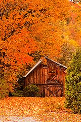 Foliage barn:     The contrasts between the greens and oranges is awesome in this rural Vermont scene.
