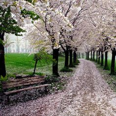 The 17 Most Magical Paths You'll Ever Be Able To Walk Down. #4 Must Have Fairy Dust - Dose - Your Daily Dose of Amazing