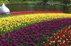 VX Florist - blomsterdesign | S:t Eriks gymnasium