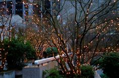 Ask anybody if they know what tree lights are and you'll likely get one of several answers. Most folks only think of tree lights as something to put up at Christmas, but. Outdoor Tree Lighting, Outdoor Trees, Lighting Ideas, Outdoor Spaces, Back Gardens, Outdoor Gardens, Patio Design, Garden Design, Dream Garden