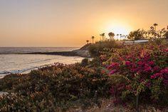 Sunset Tenerife Costa Adeje  #sunset #zonsondergang #tenerife #flowers #costaadeje #goldenhour #water #water_brilliance #viewbugfeature #landscape #landscape_lovers #beach #sergeramellireview #vacation #canon