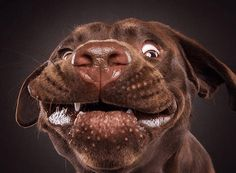 Incredible Photography of Dogs Faces as They Catch Treats