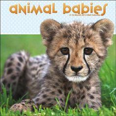 Animal Babies Wall Calendar by Trends International