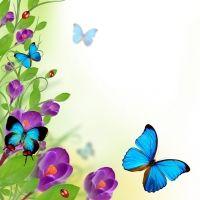 letterhead  corner summer   Изображения бабочек для фотопечати на ...