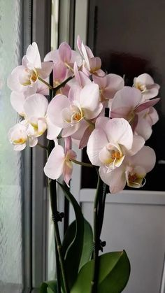 Are Orchids Safe for Cats? Xmas Pictures, Shadow Pictures, Hawaii Pictures, Moth Orchid, Orchid Plants, Gardenias, Orchid Images, Dog Calendar, Flower Close Up