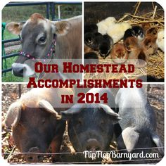 .... about our homestead accomplishments in 2014. As we were talking we began to realize that we had accomplished a bit more than we thought so I made a....