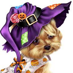 little-pumpkin-yorkie-31
