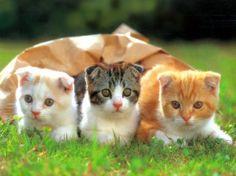 Tri mačky