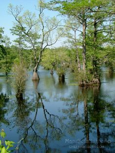 Merchants Millpond State Park - NC...Time to take in North Carolina's beauty !