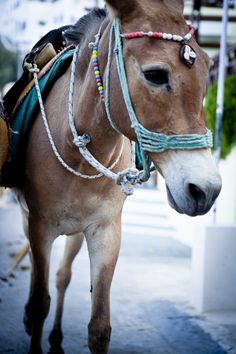 Just looked up the hidden meaning of your name & this picture of a stubborn mule pops up.go figure Work With Animals, Like Animals, Cute Baby Animals, Beautiful Creatures, Animals Beautiful, Big Horses, Sweet Soul, The Donkey, Santorini Island