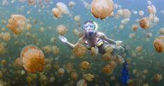 Des méduses pour faire de l'énergie solaire ? La nouvelle trouvaille des scientifiques