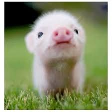 Baby Pig Nobody can resist the cuteness of baby animals. They are curious, naive, and sometimes funny, just like our kids. You're a hardened person if you can scroll through these baby animals photos without your heart beating fast. So Cute Baby, Cute Babies, Cute Baby Animals, Animals And Pets, Funny Animals, Animals Photos, Pink Animals, Animals Kissing, Farm Animals