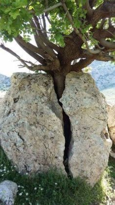 Tree told rock to move or it would make it split .  See now ?