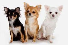 Tres amigos!!