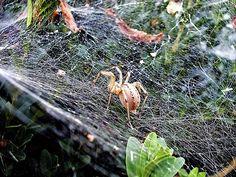 Spider by Ellie Oprea Spider, Fine Art America, Nature Photography, Plants, Pictures, Garden, Animals, Animales, Spiders
