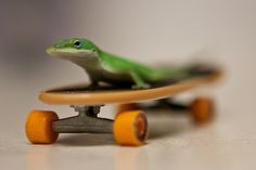 All sizes | 140 / 365 - Curious Jorge and the Magical Skateboard | Flickr - Photo Sharing!