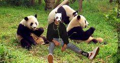 In einer spektakulären Rettungsaktion haben PETA-Aktivisten gestern den bekannten deutschen Pandabären Cro (26) betäubt und in ein Reservat in der chinesischen Provinz Sichuan ausgeflogen. Im Wolong-Naturreservat kann das Tier nun endlich ein artgerechtes Leben führen. Pandas stehen seit Jahren auf der roten Liste der gefährdeten Arten.